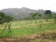 Marmato Guadalupe Huila Colombia