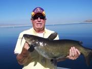 12lb cat fish