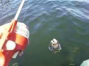 Lake Perris June 13, 2011