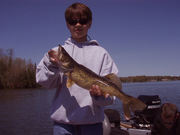 26 inch walleye