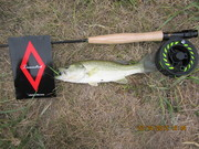 First fish with my new toy 2WT 8' fly rod