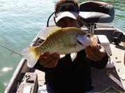 """todays big fish was a 14"""" crappie"""