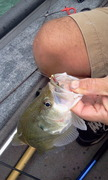 Jim's jig with an olive crappie slider