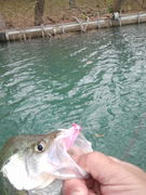 Ricks jig with a clear crappie slider