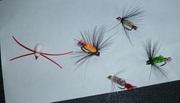 some flies