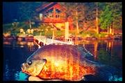 Nothin' but Panfish