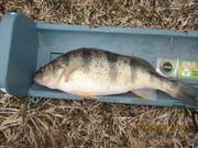Tabberts pond 3-10-13 006