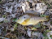 2013 fishing