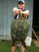 Snapping Turtle (4-23-13)
