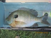 Tabbert pond 5-15-13 004