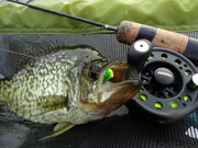 Ice rodding August Crappies too!