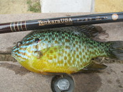 1st Tenkara Rod fish