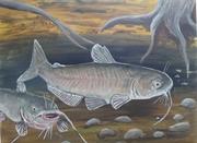 Catfish Creek 003