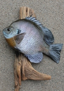 Bluegill Replica Work