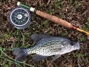 1st Crappie On the Fly This Year