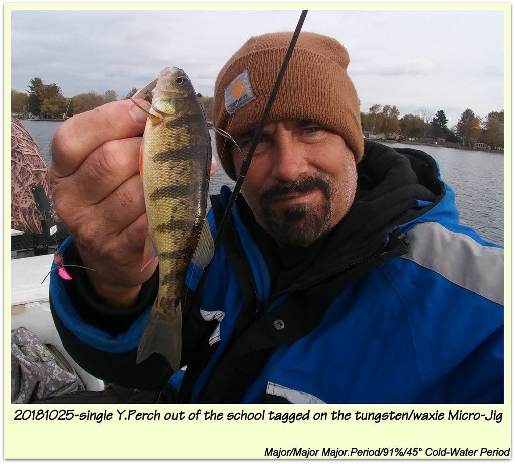 20181025-single Y.Perch out of the school tagged on the tungsten/waxie Micro-Jig