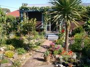 1 My garden Feb 09
