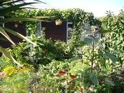 2 My garden Feb 09