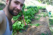 our juicing garden