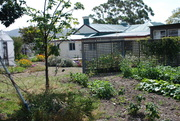house from the vegie garden