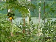 Tropical Organic Garden