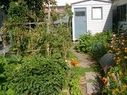 Front vegetable garden Feb 2011