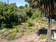 My garden February 2011 2