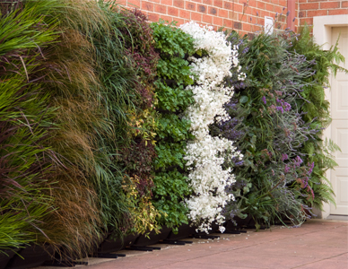 Wallgarden Vertical Garden