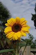 Our garden 2010-11