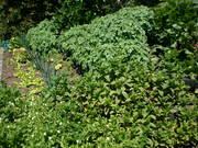 Spring Garden.Nov.2011 002