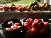 Garden toms.14Jan.2012 002