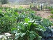 Another garden shot.