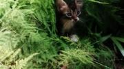 Foto de Antuan el Gato N°2