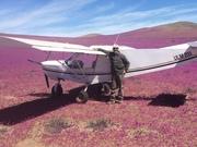 Blooming desert in Vallenar, Chile