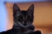 Γάτα 11-8-2009 003
