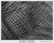 Natural Textures (b/w)