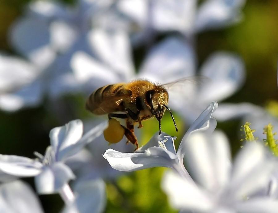 Μέλισσα on air