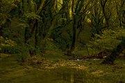 Ποταμός Γκορμός στους Αγιούς, Ήπειρος...