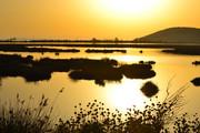 Πλημμύρισε χρυσάφι ο υδροβιότοπος