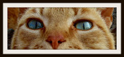 Ματια πλανα....
