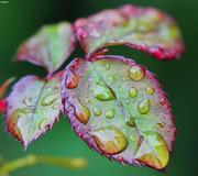 Rain drops #2
