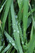 Rain drops #4