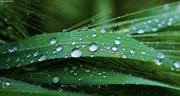 Rain drops #8