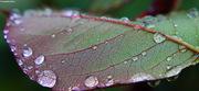 Rain drops #11