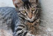 Γατάκι #2