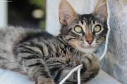 Γατάκι #4