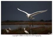 BIRDS_12_2