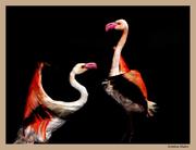 Περί εντόμων,πτηνών και ζώων