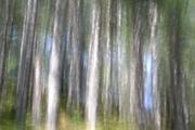 Το δάσος των ονείρων μου!