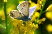 Μια ωραία πεταλούδα!
